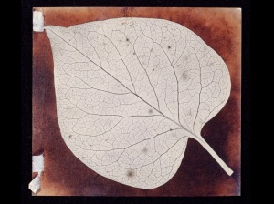 Photogenic Drawing of a Leaf. H.F. Talbot